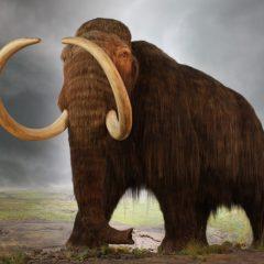 Mammuthus primigenius (Mamutul Lânos)